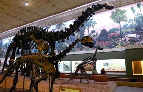 Fossil dinosaur skeletons at the Yale Peabody Museum of Natural History.
